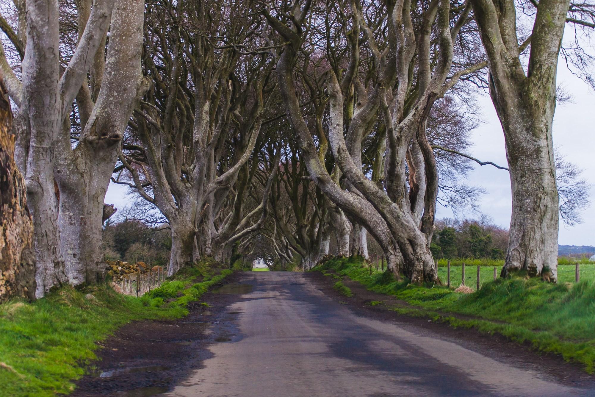 dark hedges ireland