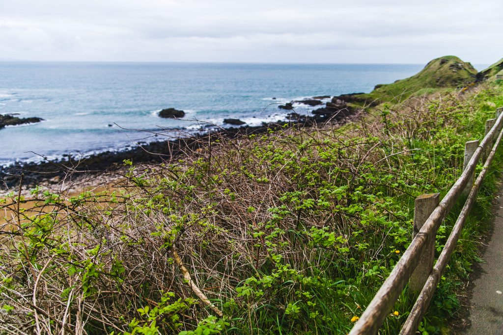 coast and vegetation in ireland