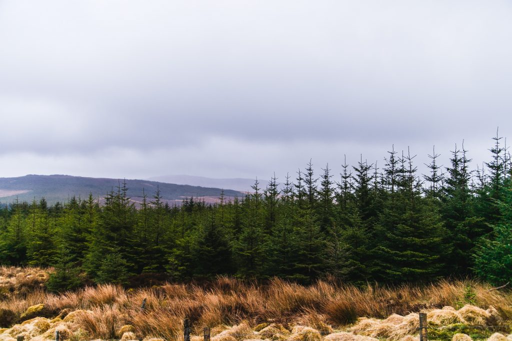 donegal forest