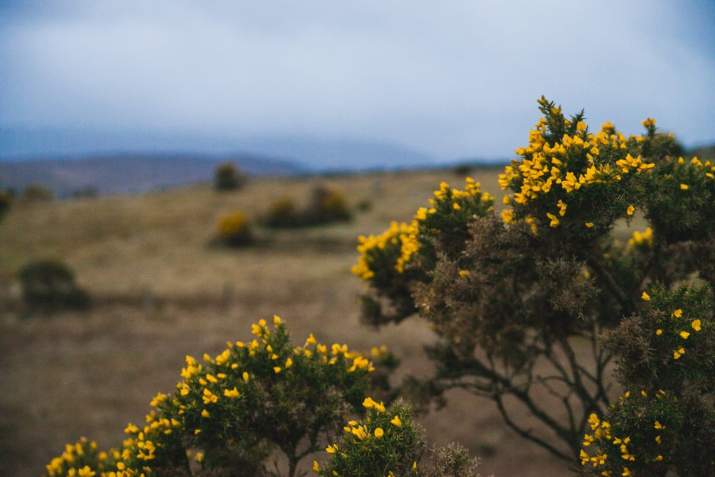 donegal wild flowers