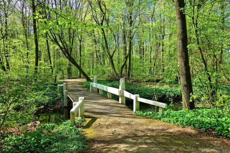 Places to visit in the New Forest