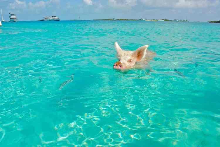 the Bahamas or Barbados