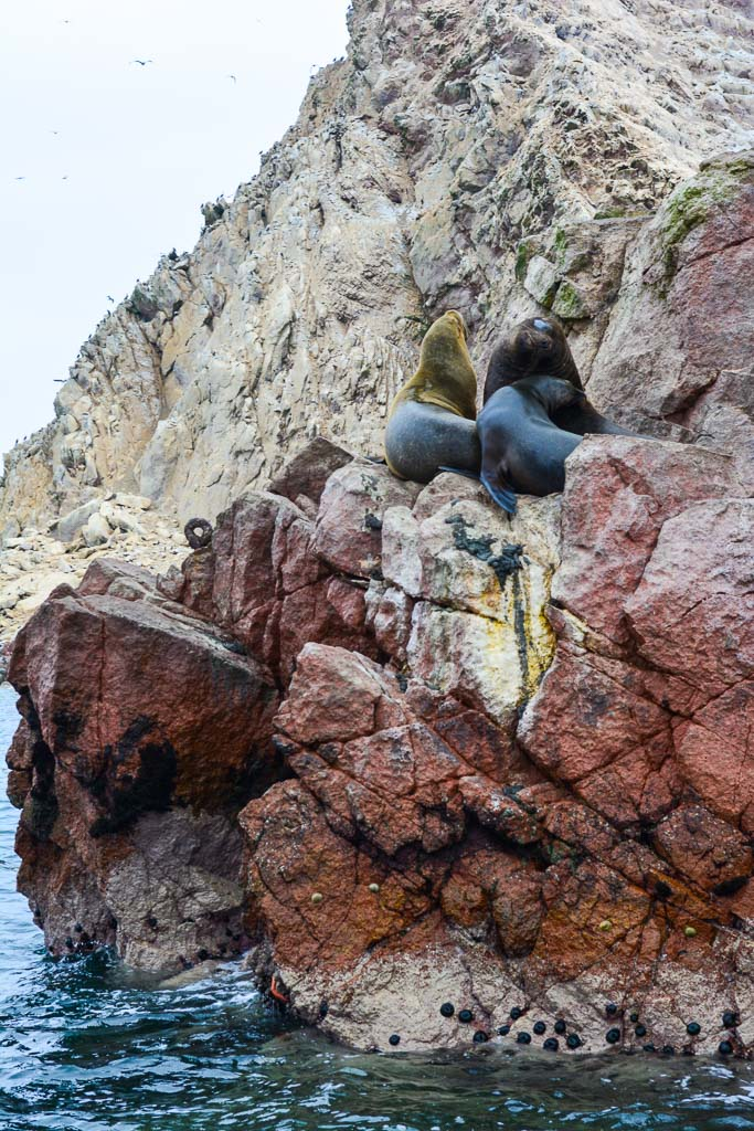 Sea Lions on the rocks in Ica, Peru