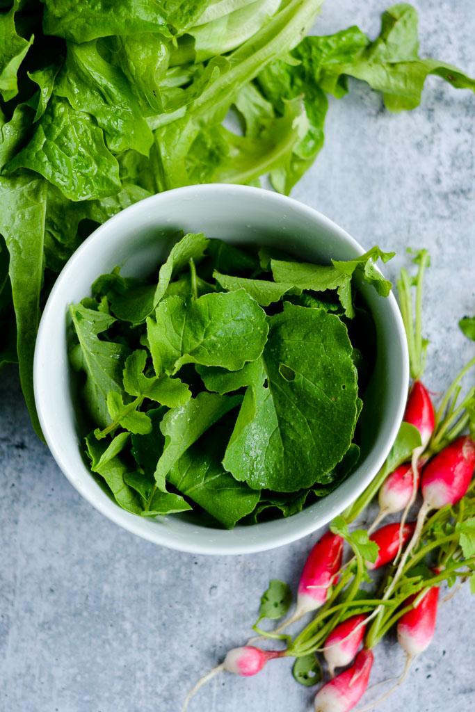 Salad greens, radish tops, and French breakfast radishes