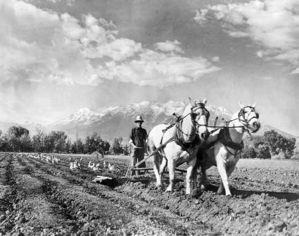 farmer in Utah with a team of horses