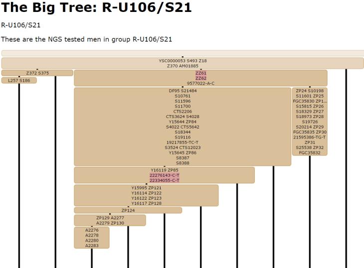 Big U106 tree