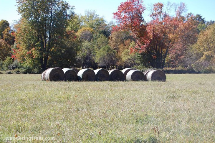 hay bales near fishkill NY