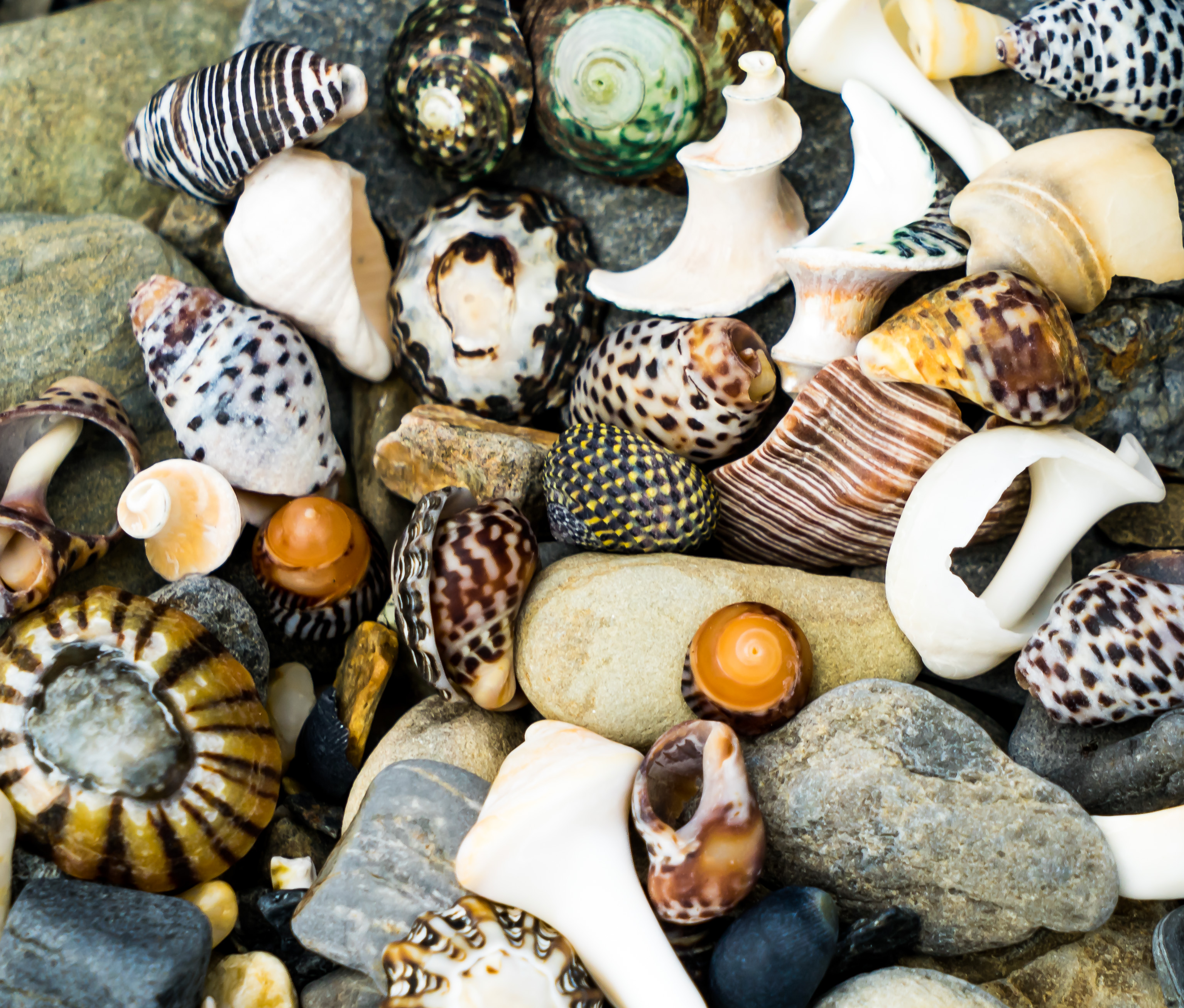 Colourful Tassie Shells