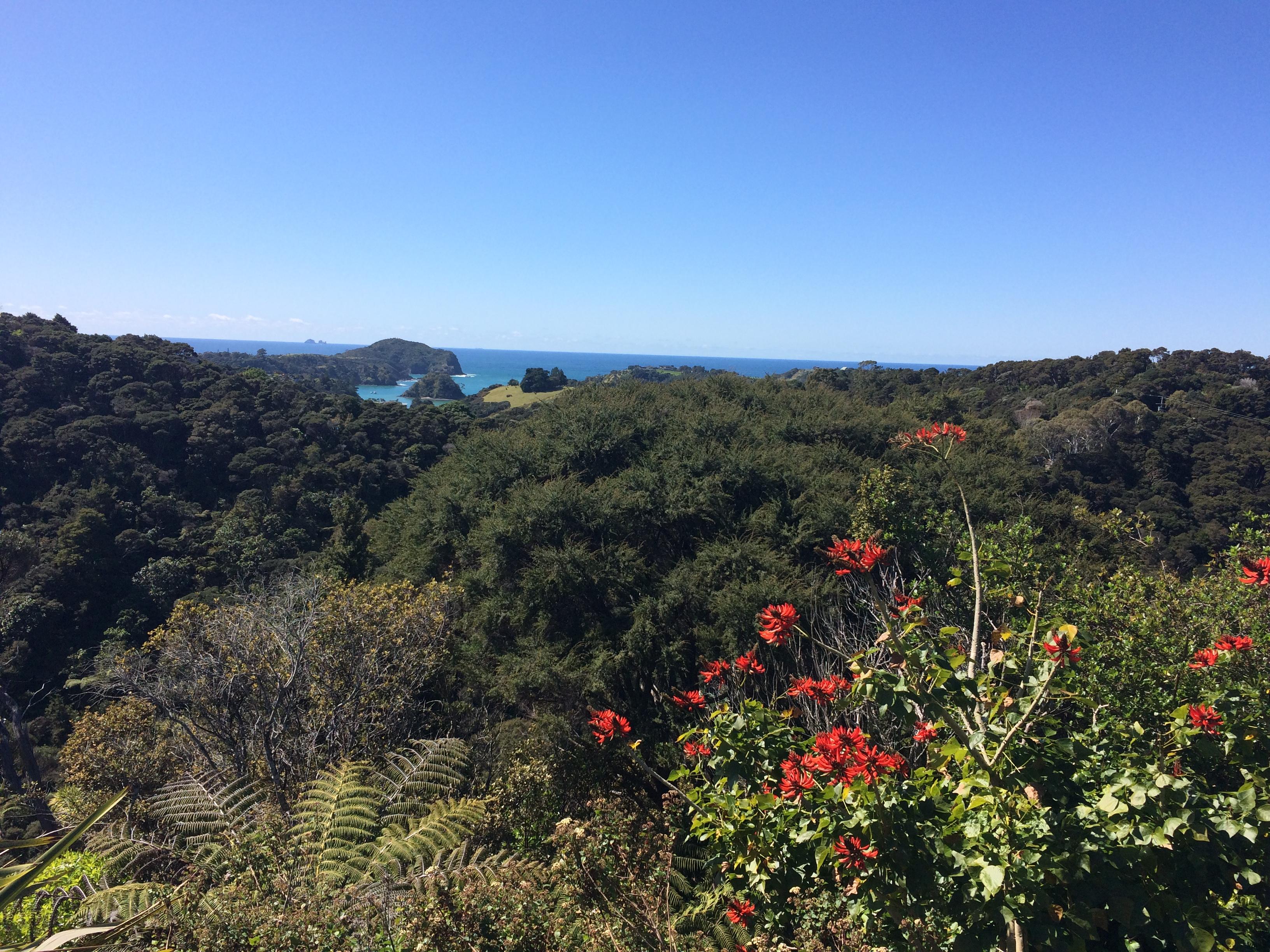 Tutukaka Coast, New Zealand, Northland, Whangarei