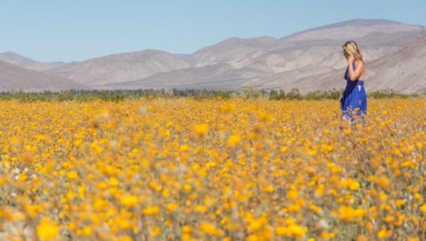 Anza-Borrego Desert, California by Wandering Wheatleys