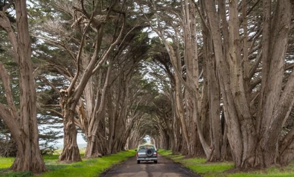 Cypress Tree Tunnel, Point Reyes, California by Wandering Wheatleys