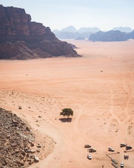 Lone Tree in Wadi Rum, Jordan by Wandering Wheatleys