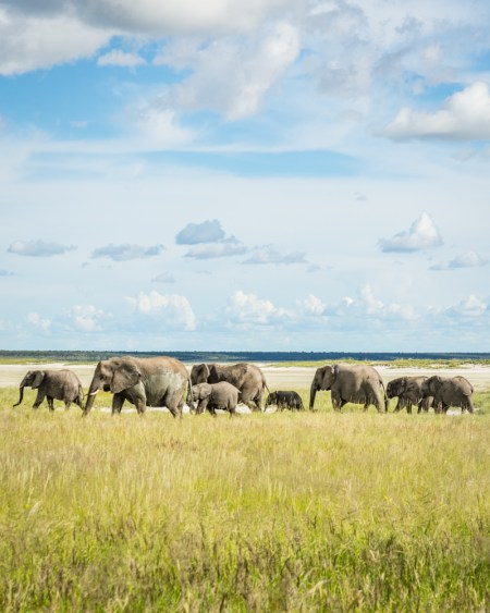 Parade of Elephants in Etosha National Park, Namibia by Wandering Wheatleys