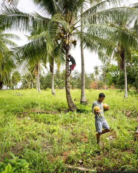 Gathering Coconuts in Balabac, Philippines