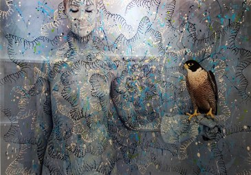 Peregrine Falcon with Spotted Sun by Emma Hack
