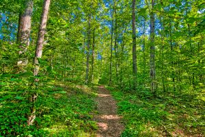 Dirt trail through green forest by Kelly Verdeck