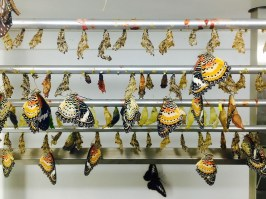 Top Attractions in Penang Entopia Buttlefly Farm