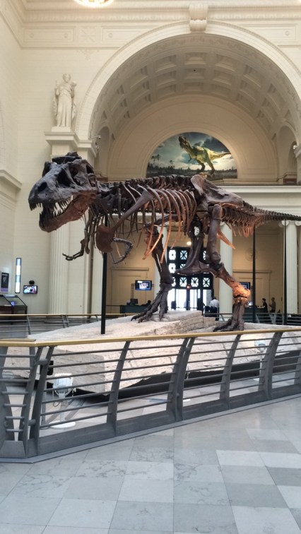 Meet SUE, the largest, most complete, and best preserved Tyrannosaurus rex ever discovered.
