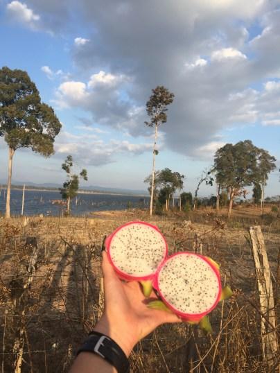 The best snack, dragonfruit!