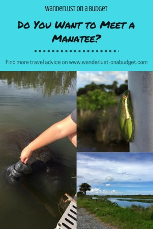 Do You Want to Meet a Manatee - Merritt Island Wildlife Refuge - things to do in Florida - Wanderlust on a Budget - www.wanderlust-onabudget.com
