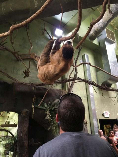 RI Zoo Sloth
