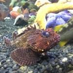 Denver Rockfish