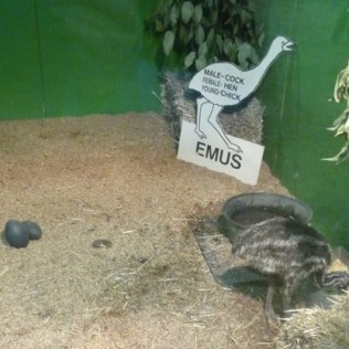 RMS Emus
