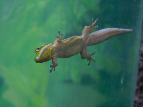 Winter Zoo - Gecko 2