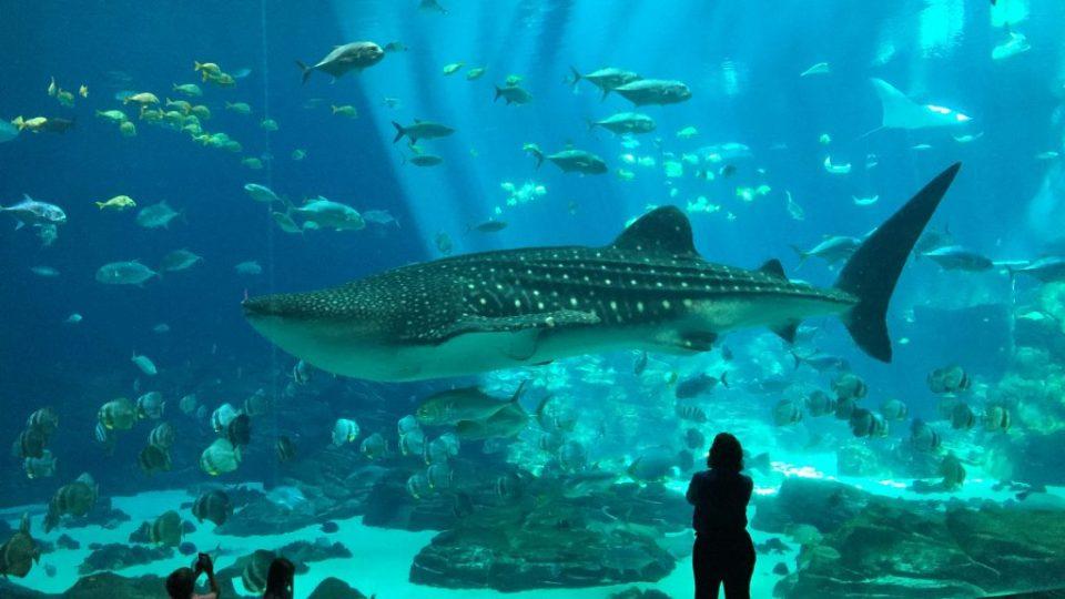Atlanta Aquarium Shark