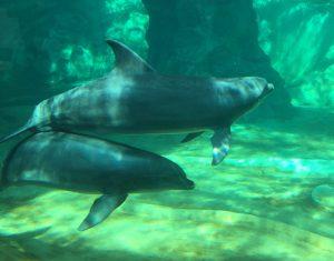 Atlanta Dolphins