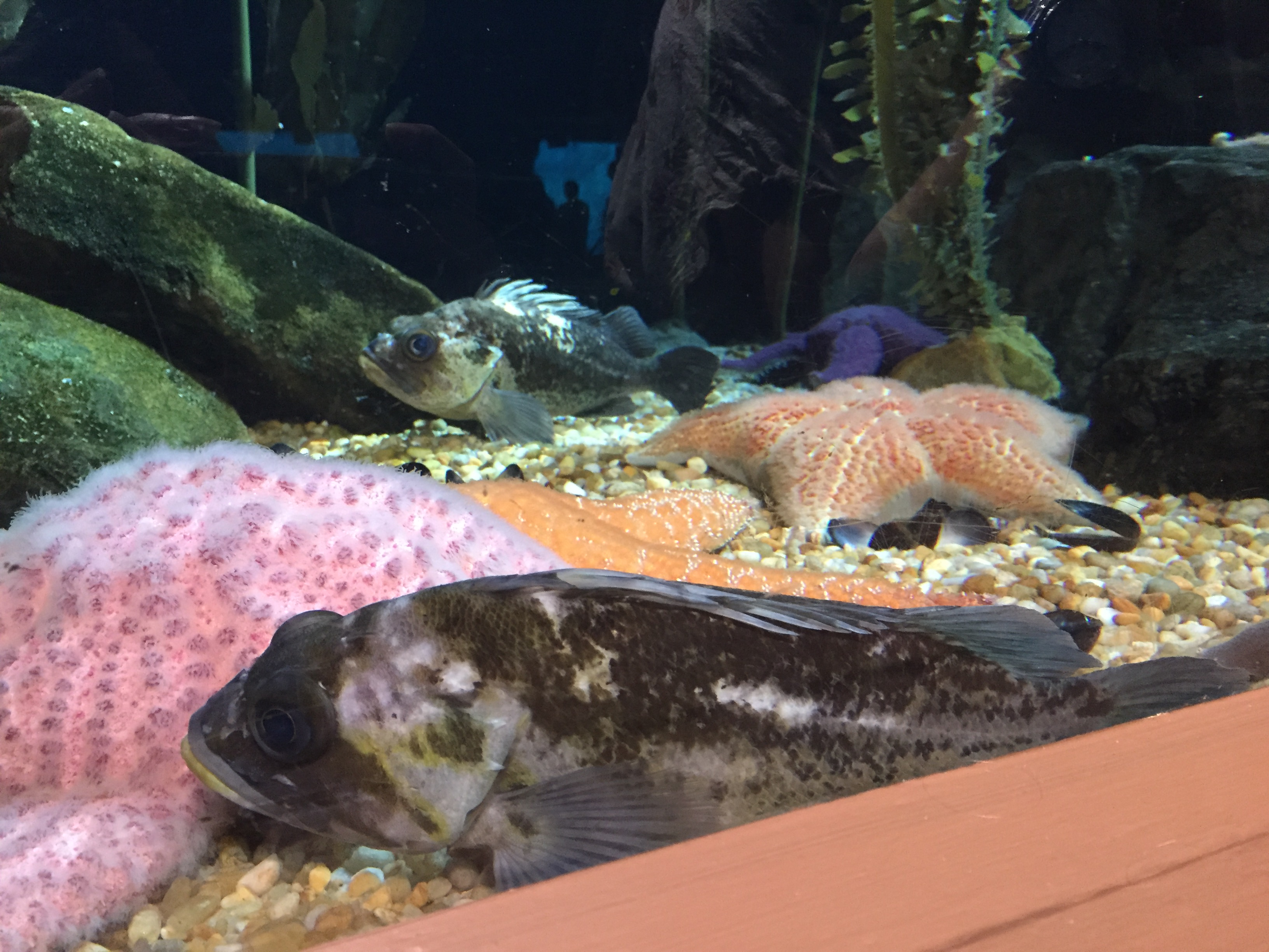 Atlanta Fish 2