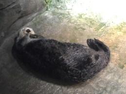 Atlanta Otter