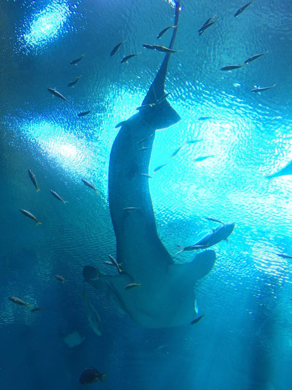 Atlanta Shark 2