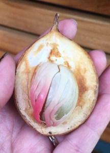 Belize Spice Farm Fruit