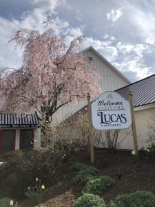 Cayuga Lake - Lucas Winery