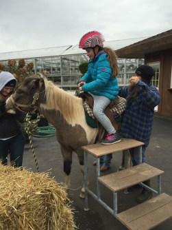 Hafners Pony Ride