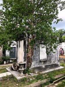 New Orleans - Lafayette Cemetery Mausoleum with Tree