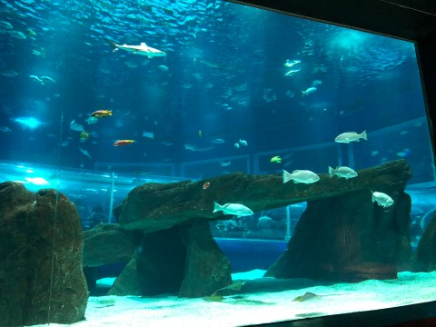 AquaRio Fish Brazil