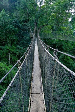 Kakum Rope Bridge