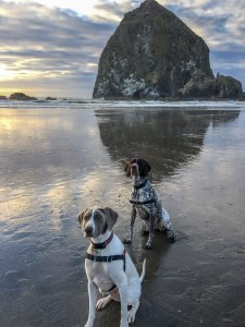 Dogs at Cannon Beach, Oregon