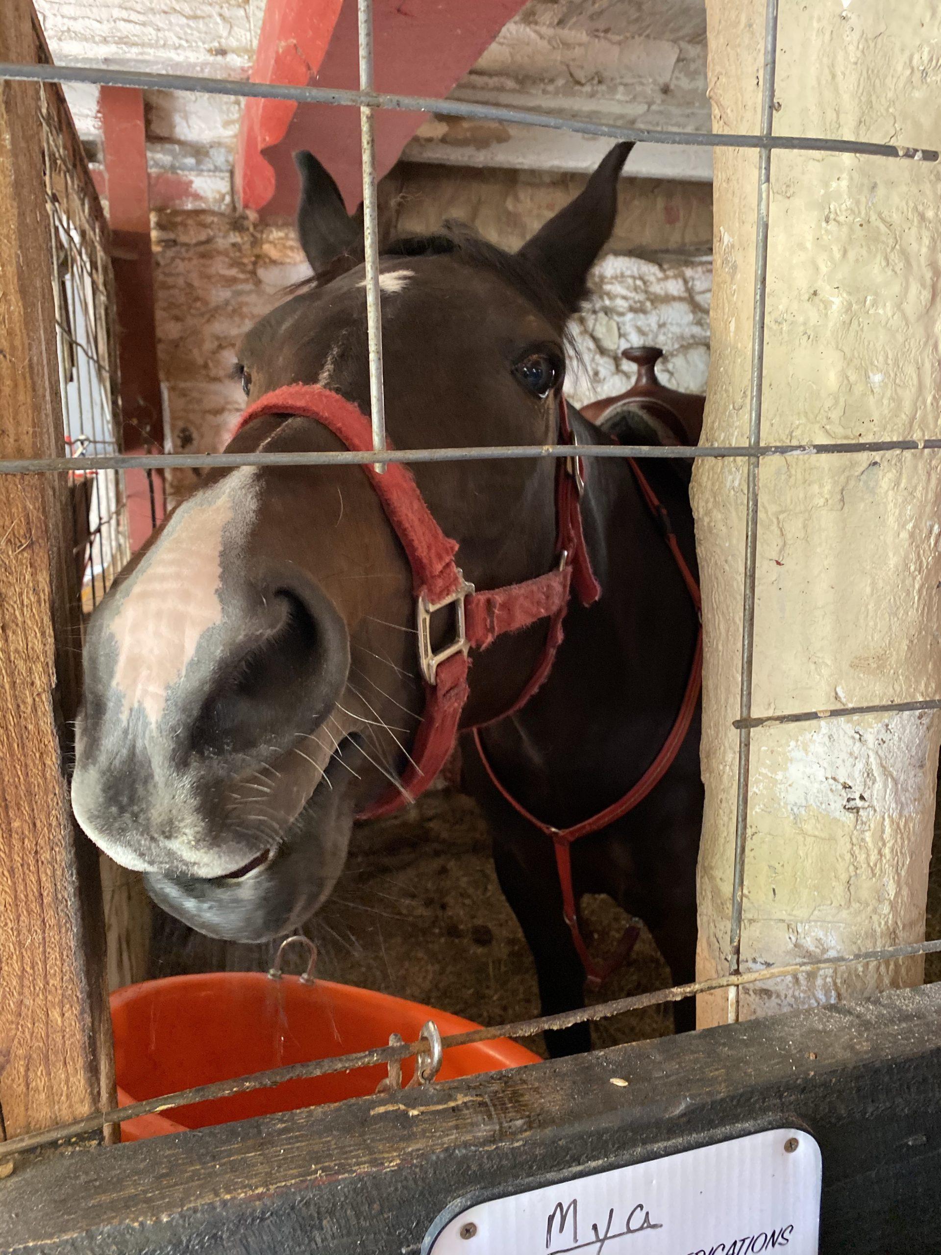 Patchwork Horseback Riding - Mya