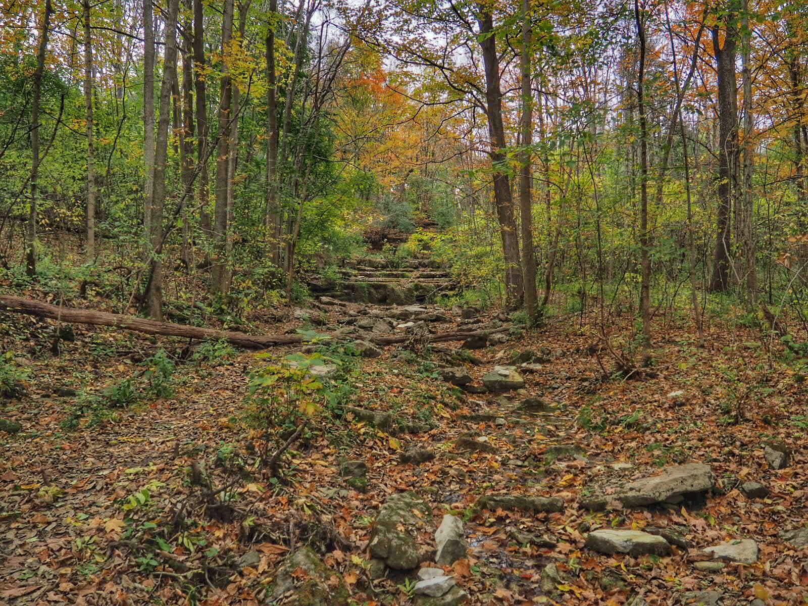 Three Falls Woods Trail
