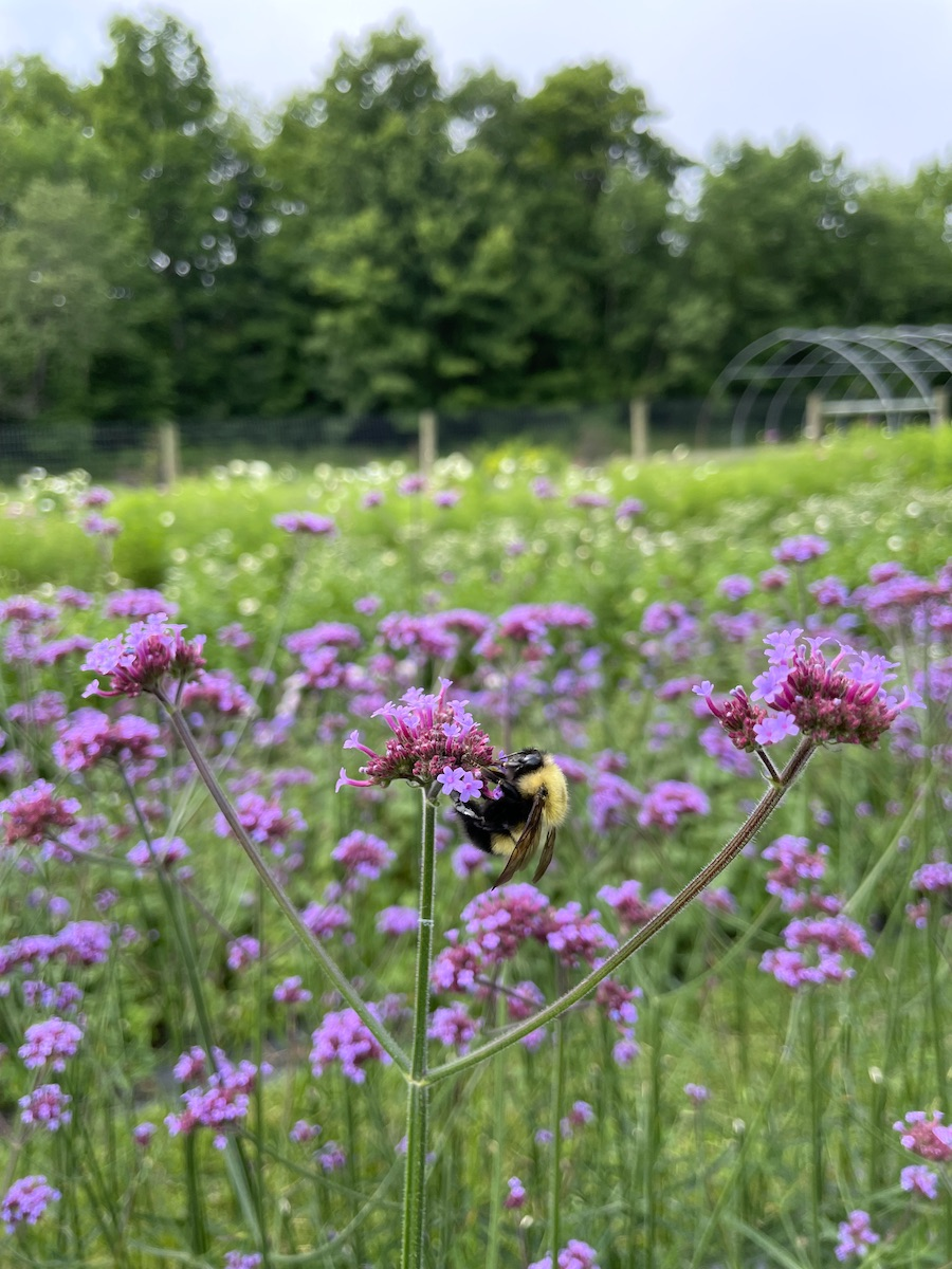 Bee at Withy Hollow Farm