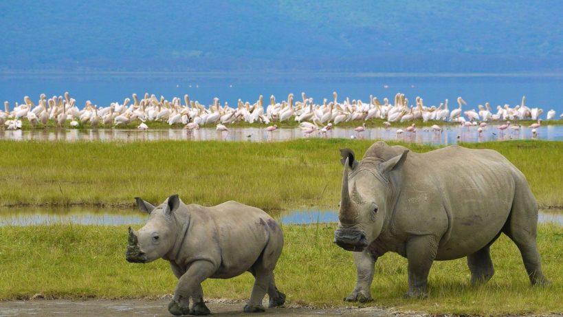 Lake Nakuru National Park Kenya