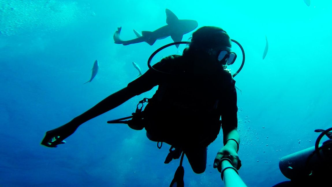 divebelize-sharks