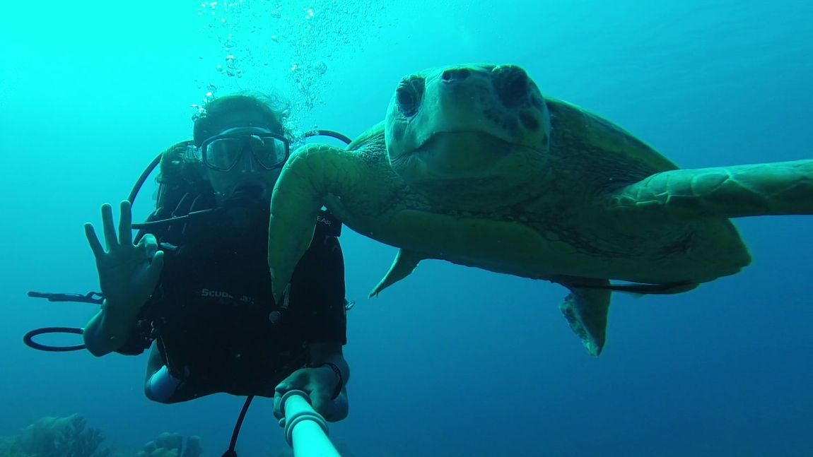 divebelize-turtleselfie