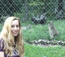 Curious Bobcats