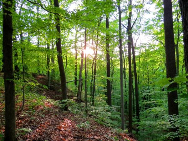 brecksville reservation best hiking cleveland metroparks