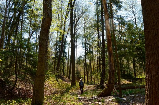 hell hollow wilderness area best hiking near cleveland