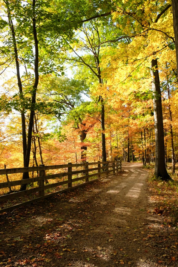 rocky river reservation best fall hikes near cleveland